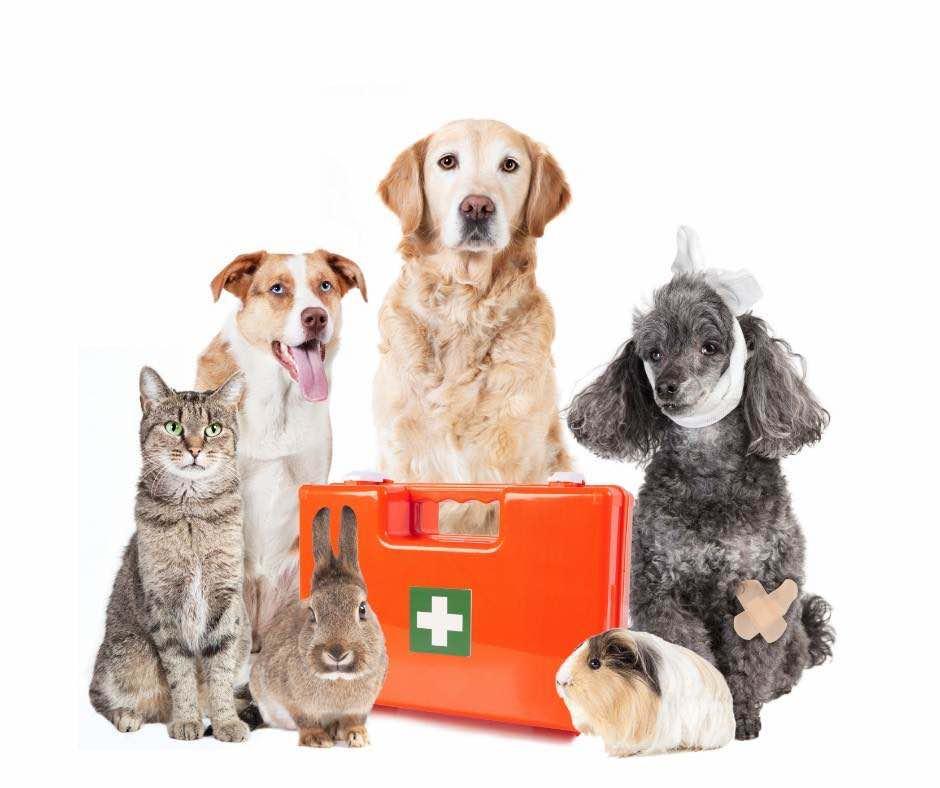 Veterinario de urgencias en Fuenlabrada