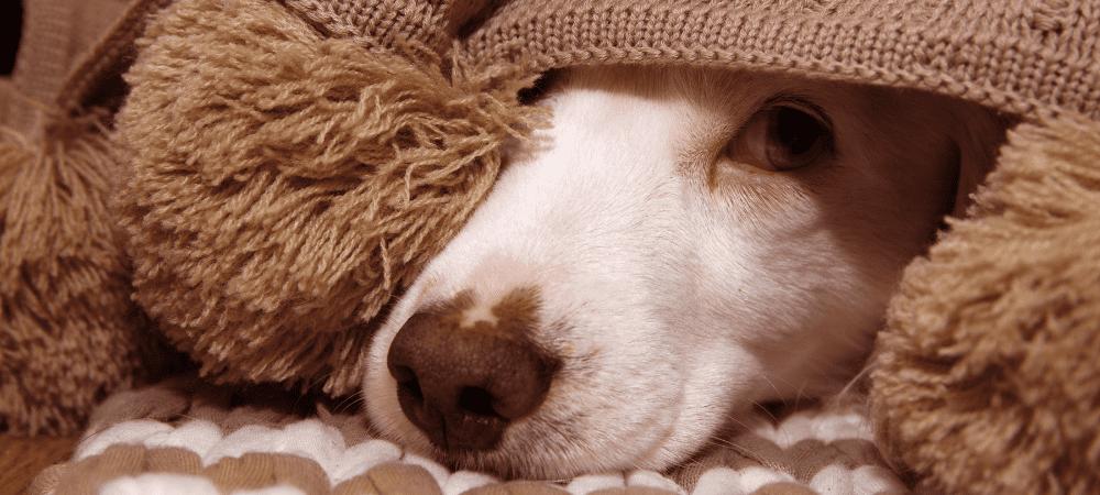 webminar miedo ruido animales